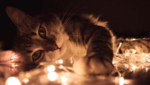 grey tabby cat lying on white led light string