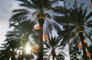palm trees with commercial lighting display